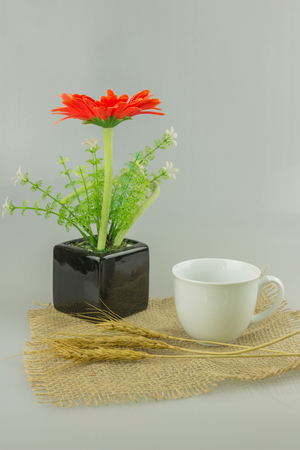 Orange flower in a vase with coffee on isolate background.