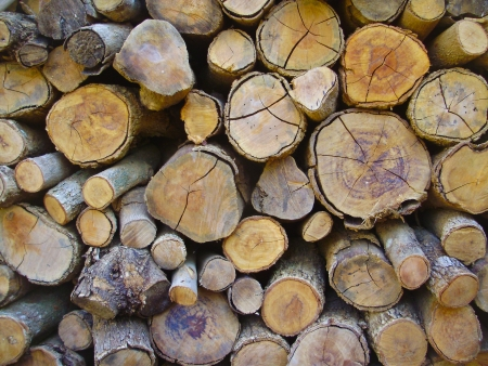 Logs end face photo