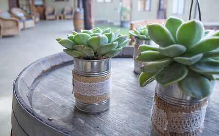 Bonsai Succulent Cactus Decor for Wedding