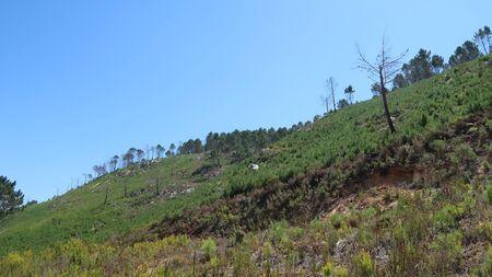 mountainside: Greenery on the Mountainside