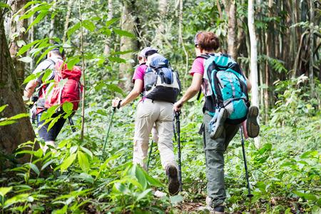 Groep mensen wandelen in een tropisch bos