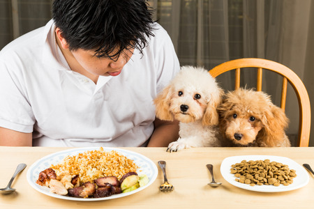 plateful: A teenager with two poodle puppies on dining table with plateful of food and kibbles Stock Photo