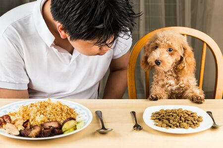 plateful: A teenager with a poodle puppy on dining table with plateful of food and kibbles