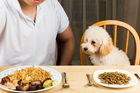 eyeing: Puppy eyeing the plate of rice and meat on a teenagers plate and show no interest on her plate of kibbles