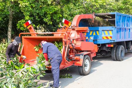 Werknemers laden boomtakken in de houtversnipperaar machine voor het versnipperen