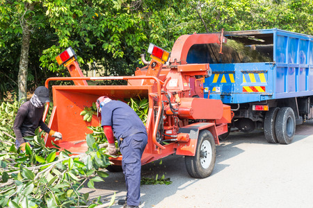 chipping: Workers loading tree branches into the wood chipper machine for shredding Editorial