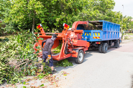tree removal service: Workers loading tree branches into the wood chipper machine for shredding Editorial