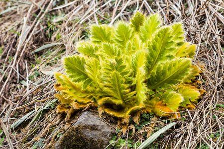 altitude: Unique vegetation on high altitude barren mountain in Nepal