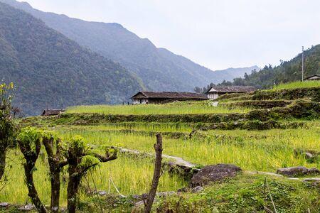 terraced: Terraced plantation on hill slopes