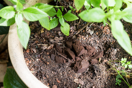 Used or spent coffee grounds being used as natural plants fertilizer Standard-Bild