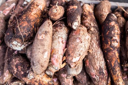 heaps: Heaps of freshly harvested tapioca roots Stock Photo