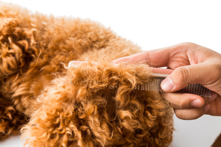 dog grooming: Close up of dog fur combing and detangling during grooming Stock Photo