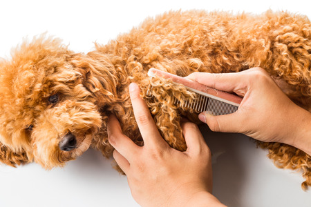 purebred dog: Close up of dog fur combing and detangling during grooming Stock Photo