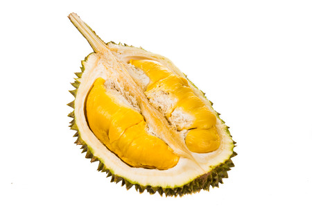 Freshly harvested durian fruit with delicious golden yellow soft flesh 写真素材