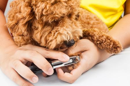 Hund Nägel während Pflege geschnitten und getrimmt werden Standard-Bild - 43549156