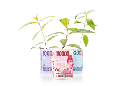 Concept of green plant grow on Indonesia Rupiah currency note.