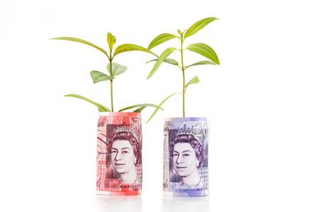 gbp: Concept of green plant grow on British Pound currency note.
