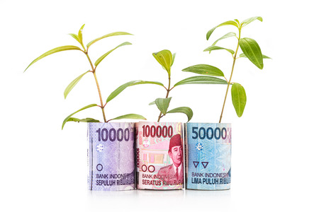 rupiah: Concept of green plant grow on Indonesia Rupiah currency note.