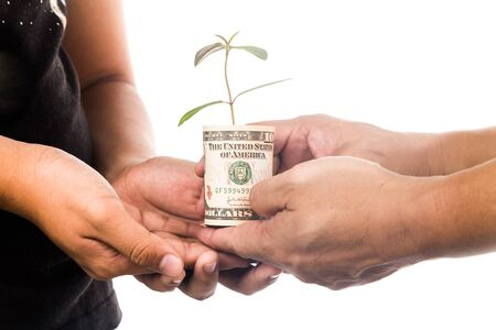 financial concept: Concept of presenting plant growing from USD currency, symbolizing growing financial wealth.