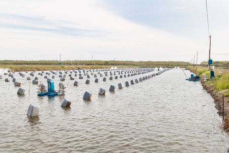 peces: Aquacultural farm for oysters.