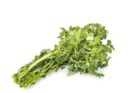 watercress: Bundle of freshly harvested watercress rich in vitamin and nitrate