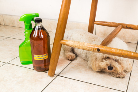 environmentally friendly: Apple cider vinegar discourage dogs and cats from chewing on furniture