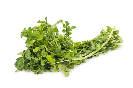 berro: Manojo de berros recién cosechado rico en vitamina y nitrato