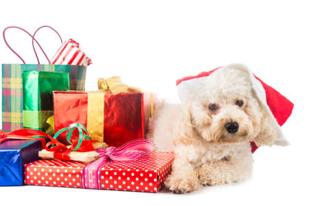 abundant: Cute poodle puppy in Santa costume with abundant Christmas gifts Stock Photo