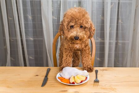 eating fruits: Concept of exciteddog having delicious raw meat meal on table