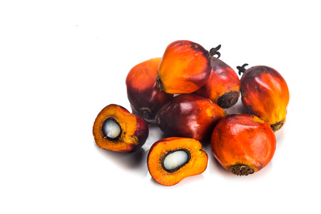 palm fruits: Heaps of freshly harvested oil palm fruits on white background