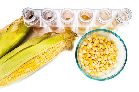 bio diesel: Corn generated ethanol biofuel with test tubes on white background