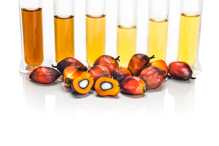 biofuel: Oil palm biofuel biodieselwith test tubes on white background Stock Photo