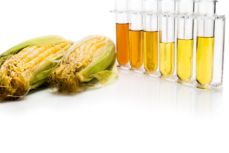 biofuel: Corn generated ethanol biofuel with test tubes on white background