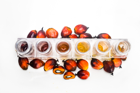 biofuel: Oil palm biofuel biodiesel with test tubes on white background