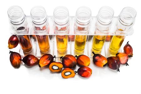 probeta: La palma de aceite biodiesel biocombustible con tubos de ensayo sobre fondo blanco