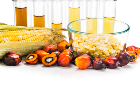 derived: Maze corn and oil palm derived biofuel in test tubes