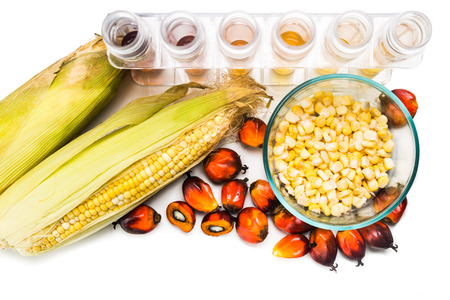 biofuel: Maze corn and oil palm derived biofuel in test tubes