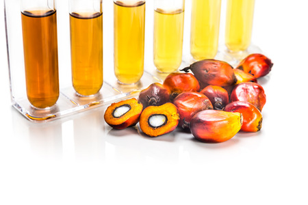food research: Oil palm biofuel biodiesel with test tubes on white background