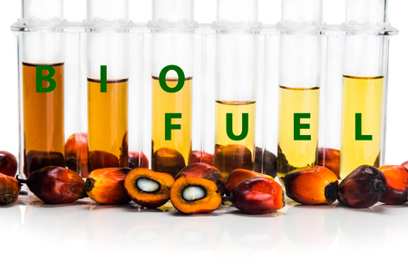 derived: Oil palm derived biodiesel in test tubes and BIOFUEL word. Stock Photo