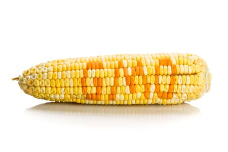 genetically modified crops: Concept of corn maize with GMO on corn seeds kernels.