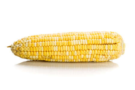 maize: Fresh corn maize cob with kernel seeds without husk.