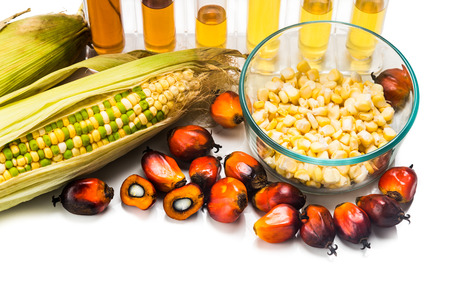 oil industry: Corn and Oil Palm generated ethanol in test tubes, with BIOFUEL on maize.