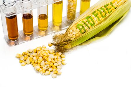 biofuel: Corn generated ethanol in test tubes, with BIOFUEL on maize.