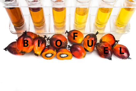 biodiesel: Oil palm biodiesel with test tubes and the word BIOFUEL.