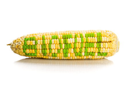 biofuel: Concept of corn maize with BIOFUEL on corn seeds kernels.