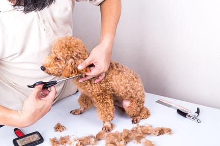 Groomer governare marrone cane barboncino con scissor in salone