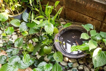 Tray en pannen in openlucht winkels stilstaand water en broedplaats voor muggen Stockfoto