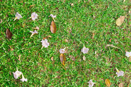 beautify: Beautify texture of dried leafs on grass at park, ideal as background Stock Photo