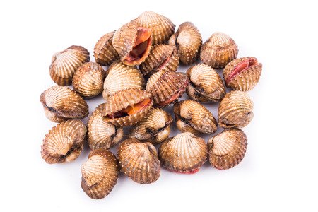 cockles: Heap of fresh and living cockles shells with white background Stock Photo