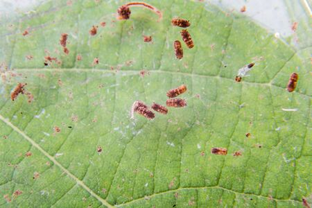 breeding ground: Closeup of mosquito larva found on potted plants with stagnant water within home
